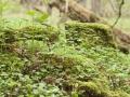 DS Garten- und Landschaftsbau Bad Münstereifel_Ausgleichspflanzungen