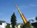 DS Garten- und Landschaftsbau Bad Münstereifel_Baumfällung2