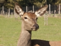 D.S. Garten- & Landschaftsbau Jagdreviergestaltung