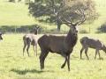 D.S. Garten- & Landschaftsbau Jagdreviergestaltung3